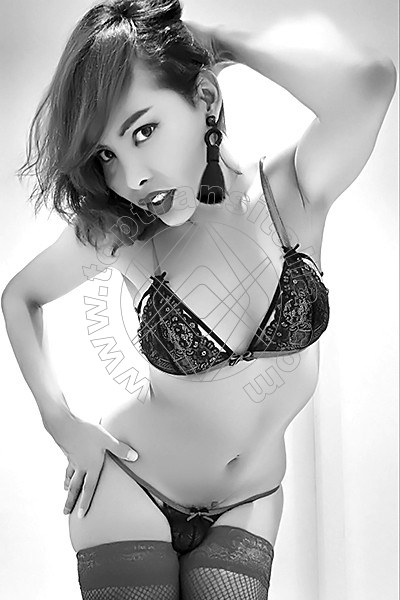 Asia Young MODENA 3895203577